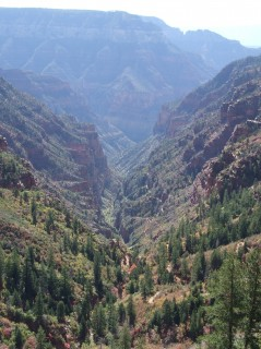 the canyon 239x320