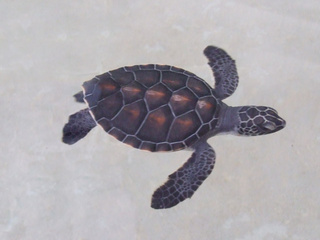 tortise 320x240