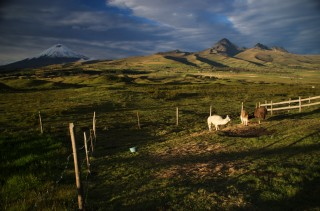 cotopaxi and llamas secret garden cotopaxi 320x211