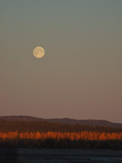 yukon fall moon 240x320